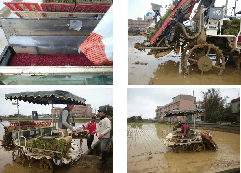 SK Cote Transplanting Rice