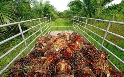 [Crop Guide] SMARTGRO® Oil Palm Fertilizer Application